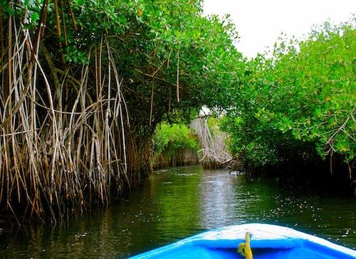 Exploring The La Tovara Jungle River By Boat Near San