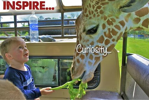 Inspire Curiosity...